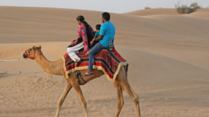 An expat family camel riding in UAE